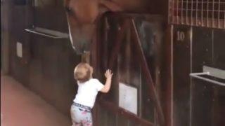 【海外の反応】あまりにも若すぎる競走馬のお世話係
