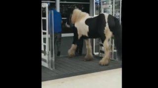 【海外の反応】愛馬と一緒にスーパーでお買い物中の男性客、出口まで誘導される