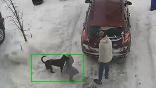 【海外の反応】犬用オモチャの正しい選び方「禁断の巨大テディベア」