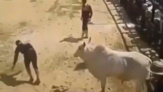 【海外の反応】誰も思いつかないような、自殺行為に近い方法で牛に乗る男
