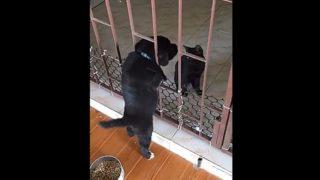 【海外の反応】「黒の絆」で結ばれた子犬と子猫