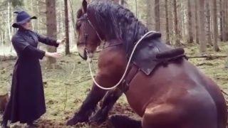 【海外の反応】ガチムチ系巨大馬にお座りさせちゃうドレス姿の女…