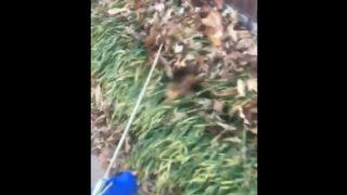 【海外の反応】「落ち葉でスノーケリングする犬???」