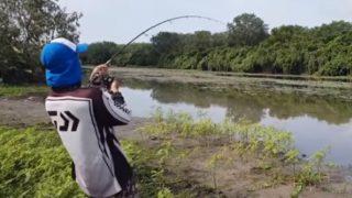 【海外の反応】ワニに大物を横取りされた釣り人