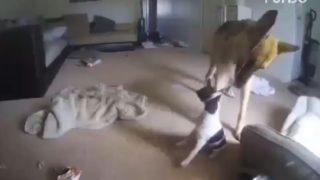 【海外の反応】友達ワンコを救ったヒーローは、またしてもあの犬種だった
