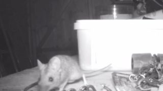 【海外の反応】お片づけ上手なネズミ