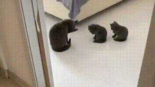 【海外の反応】子猫の学校