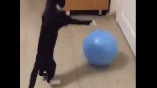 【海外の反応】ボールの扱いが見事なニャンコ