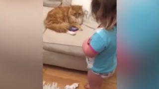 【海外の反応】少女にオモチャを返すことを拒む猫