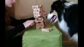 【海外の反応】驚くほど知的な犬による、驚くほど知的な遊び!