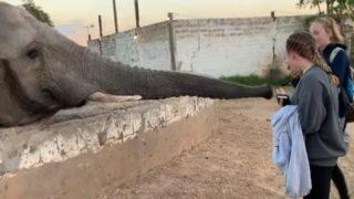 【海外の反応】女子高生に強烈な鼻パンチをお見舞いするアフリカゾウ