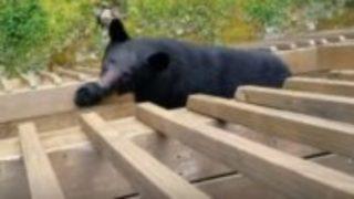 【海外の反応】二階のバルコニーでオヤツを食べてたら、クマが登ってきた…