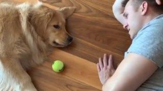 【海外の反応】暑い日はおウチで愛犬とダラダラ遊ぼう!