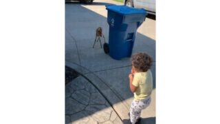 【海外の反応】「ピュアなめぐり逢い」小鹿の人間の子供に対する反応