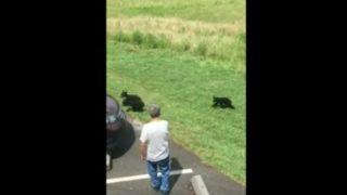 【海外の反応】子連れのクマを前に男がとった「まさかの行動」