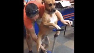 【海外の反応】「脱・四つ足歩行」に挑む看板犬