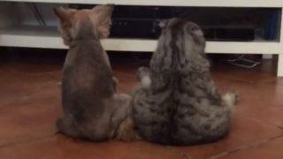 【海外の反応】まるで人間みたいに仲良くテレビを見てまったりする犬と猫
