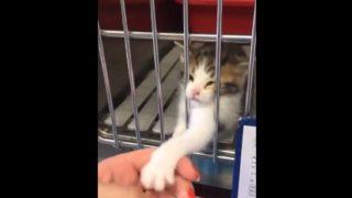 【海外の反応】保護してもらおうと必死に訴える子猫