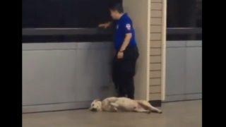 【海外の反応】暑さでやる気を失った(?)警備犬