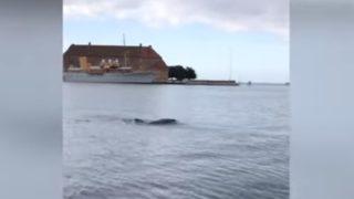 【海外の反応】クラゲでお手玉するイルカ