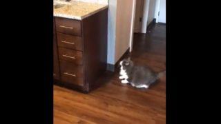 爆笑デブ猫チャレンジ!!「果たして、奇跡は起こるのか?」