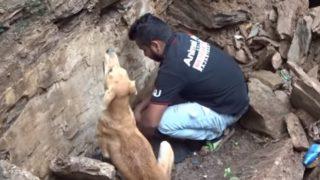 【海外の反応】もらい泣き注意!!「生き埋めになった子犬たちを救おうとして、絶望的な現場で救助隊を導く母犬」