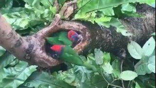 【海外の反応】発見!ジャングルの中の「小鳥専用」天然露天風呂