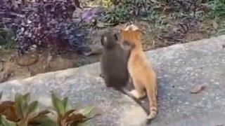 子ネコと子ザルの美しき友情