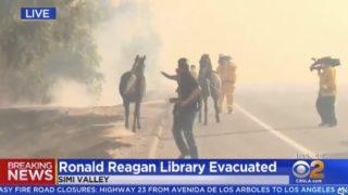 生放送中のTVカメラが偶然捉えた「家族を救うために火災現場に引き返す馬」