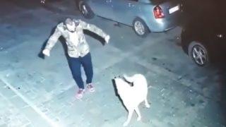 「ただ愛されたくて…」男と野良犬、真夜中のダンス