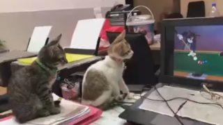 「トムとジェリー」を見た猫の反応