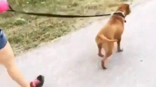 殺処分の危機を乗り越えた後の初めてのお散歩で喜びを爆発させる元保護犬