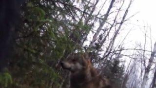 猟犬「ある日、森の中、オオカミさんに出会ったワン!」