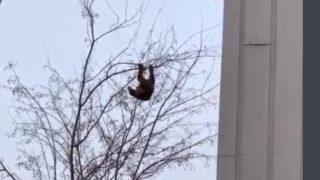 木から降りれなくなった子熊を助ける優しすぎる男たち