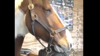 馬の明らかに一線を越えた愛情表現に対するニャンコの反応