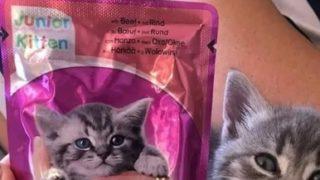 キャットフードのパッケージの猫にくりそつなうちの猫