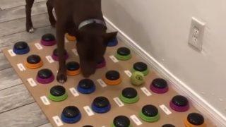驚くべき方法で飼い主さんと会話する犬
