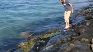 ウミガメにも親子愛や仲間意識があるのか?