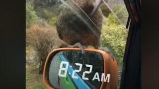 目撃!!おもてなし上手なニュージーランドの『栓抜き鳥』
