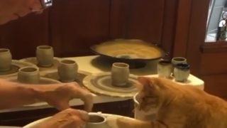 陶芸家見習い中のニャンコ