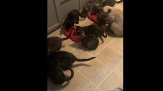 飼い主さん募集中の子猫たち。最初に引き取られるのは、意外にもこんなタイプだった!