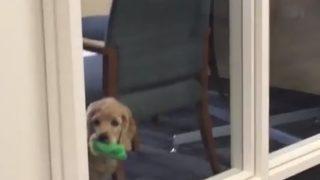 職場の空気を読む「オフィス犬」