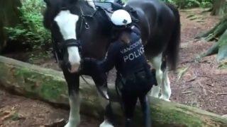出動!バンクーバー警察騎馬隊の凸凹コンビ