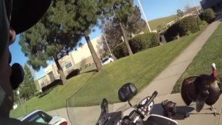 白バイ警官にスピード違反で捕まったドライバー、アメリカン・ホリデーシーズンに欠かせない「あの鳥」に救われる