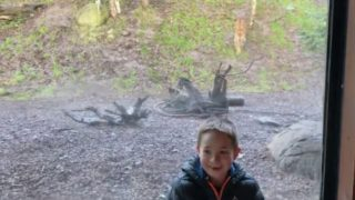 背後から少年に忍び寄る動物園のトラ