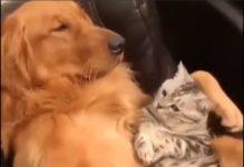 【海外の反応】犬でも知っている「お腹の上に猫が乗っている時にやってはいけないこと」