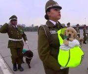 【海外の反応】「世界で最も可愛らしい軍事パレード」チリ警察軍・警察犬部隊にもうメロメロ…