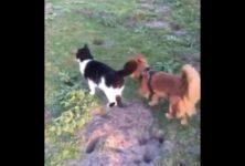 【海外の反応】犬の散歩から帰ると出迎えてくれるニャンコ