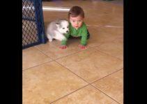 【海外の反応】子犬に耳打ちされ(?)動揺する男の子