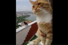 【海外の反応】ニャンコにおやつを盗まれたカラス、怒りの猛抗議!